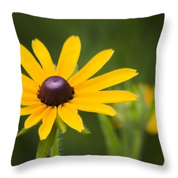 Black Eyed Susan Throw Pillow by Adam Romanowicz