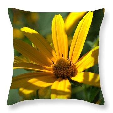 Throw Pillow featuring the photograph Black Eyed Susan by Cathy Shiflett