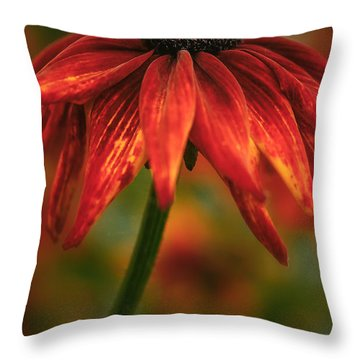 Black-eyed Susan Throw Pillow by Jacqui Boonstra