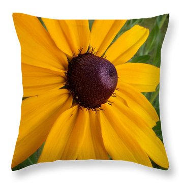 Black Eyed Susan Throw Pillow by Mary Lee Dereske