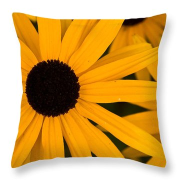 Black Eyed Susans Throw Pillow by Brent L Ander