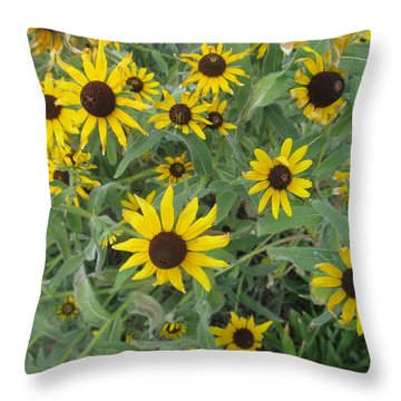 Throw Pillow featuring the photograph Black Eyed Susans by Tina M Wenger