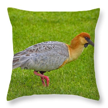 Black-faced Ibis Throw Pillow by Tony Beck
