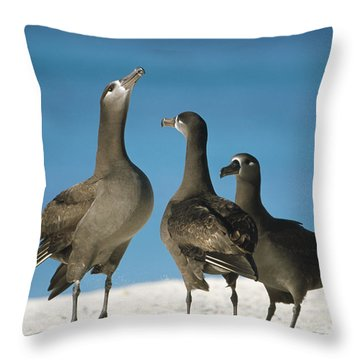 Black-footed Albatross Gamming Group Throw Pillow by Tui De Roy