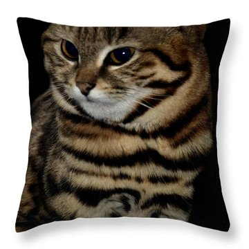 Black-footed Cat Throw Pillow by Maria Urso