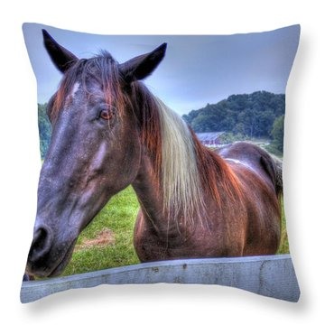Throw Pillow featuring the photograph Black Horse At A Fence by Jonny D