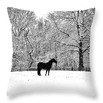 Black Horse In The Snow Throw Pillow by Bill Cannon