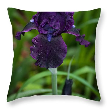 Throw Pillow featuring the photograph Black Iris by Penny Lisowski
