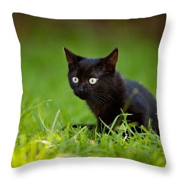 Black Kitten Throw Pillow