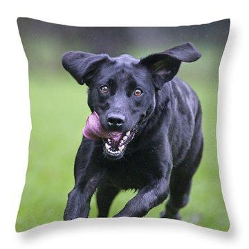 Black Labrador Running Throw Pillow by Johan De Meester