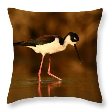 Throw Pillow featuring the photograph Black-necked Stilt Waterdrops by John F Tsumas
