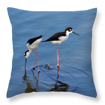 Throw Pillow featuring the photograph Black-necked Stilts by Bob and Jan Shriner