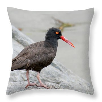 Throw Pillow featuring the photograph Black Oystercatcher-2 by Bob and Jan Shriner