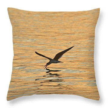 Throw Pillow featuring the photograph Black Skimmer by Dana Sohr