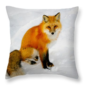 Black Socks Fox Throw Pillow