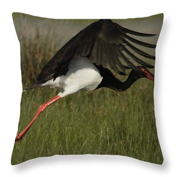 Black Stork Taking Off. Throw Pillow