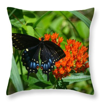 Black Swallow Tail On Beautiful Orange Wildlflower Throw Pillow by Peggy Franz