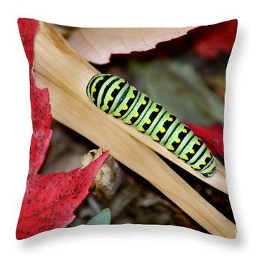 Black Swallowtail Butterfly Caterpillar Throw Pillow