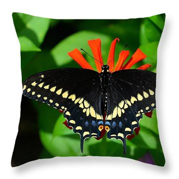 Black Swallowtail Butterfly Throw Pillow