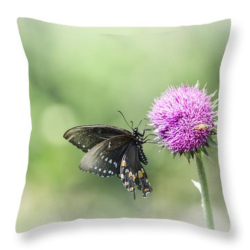 Black Swallowtail Dreaming Throw Pillow by Debbie Green