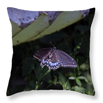 Black Swallowtail In Flight Throw Pillow by Yumi Johnson