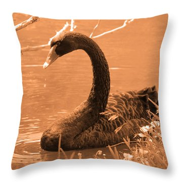 Throw Pillow featuring the photograph Black Swan by Leticia Latocki