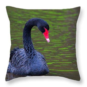 Black Swan Throw Pillow by Ram Vasudev