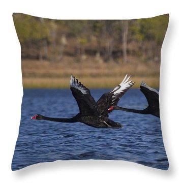 Black Swans In Flight Throw Pillow by Mr Bennett Kent