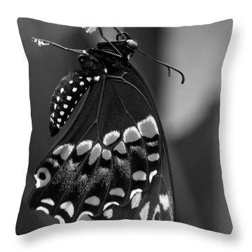 Black Swollowtail  Throw Pillow