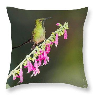 Black-tailed Train-bearer Hummingbird Throw Pillow by Dan Suzio