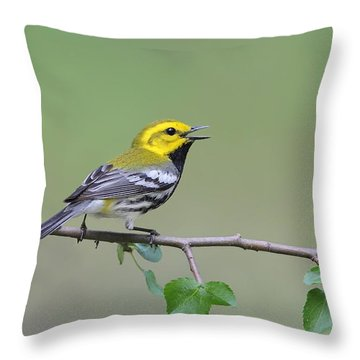 Black Throated Green Warbler Calling Throw Pillow by Daniel Behm