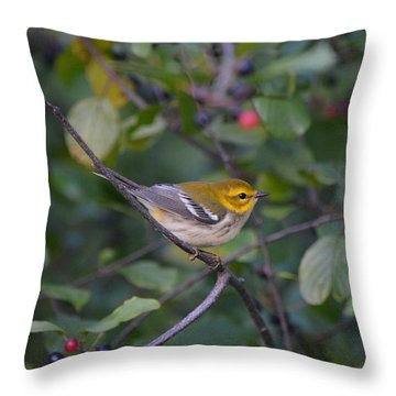 Throw Pillow featuring the photograph Black-throated Green Warbler by James Petersen