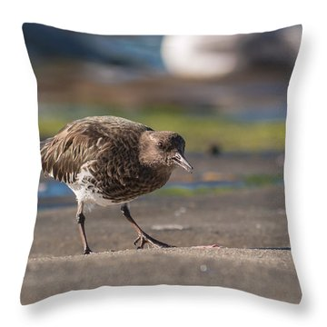 Black Turnstone Throw Pillow