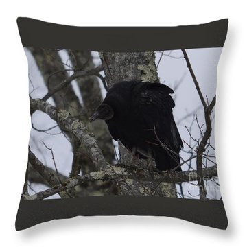 Black Vulture Throw Pillow by Randy Bodkins