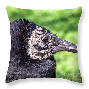 Black Vulture Waiting For Prey Throw Pillow