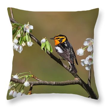 Blackburnian Warbler Throw Pillow
