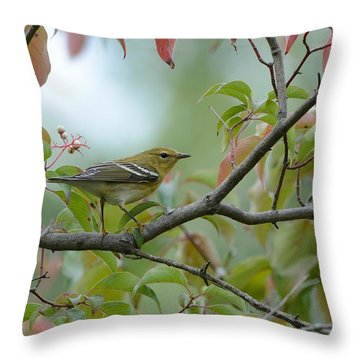 Blackpoll Warbler In The Fall Throw Pillow