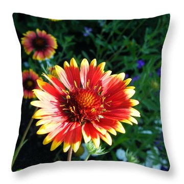 Blanket Flower Throw Pillow by Lizi Beard-Ward