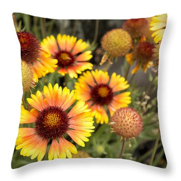 Throw Pillow featuring the photograph Blanket Flowers  by Belinda Greb