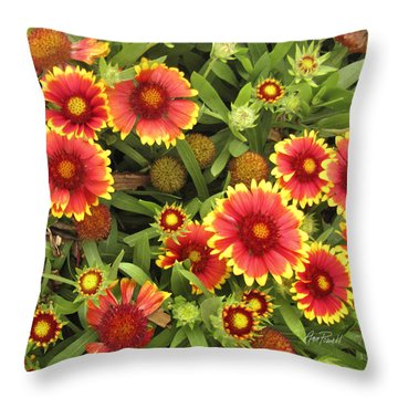 Blanket Flowers  One - Photography Throw Pillow