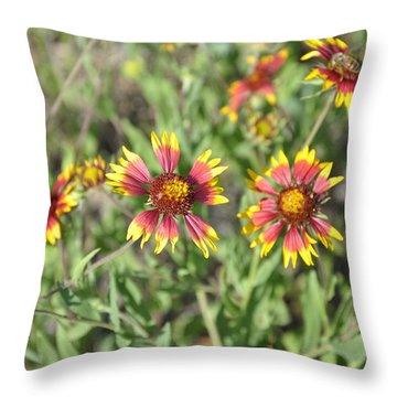 Blanketflower Throw Pillow