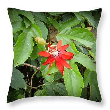Blazing Red Star Flower Throw Pillow