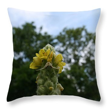Blended Golden Rod Crab Spider On Mullein Flower Throw Pillow by Neal Eslinger