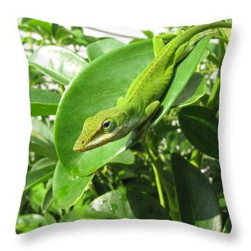 Throw Pillow featuring the photograph Blending In by Beth Vincent