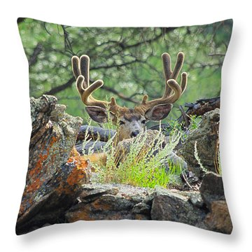 Blending In Throw Pillow
