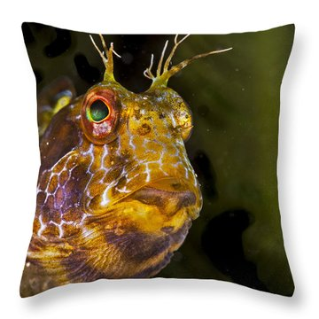 Blenny In Deep Thought Throw Pillow