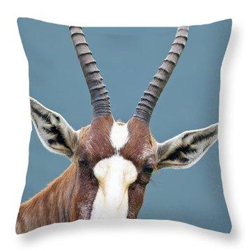 Blesbok Throw Pillows