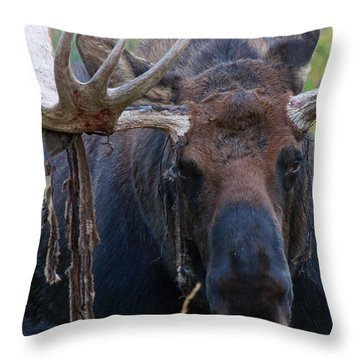 Throw Pillow featuring the photograph Blood In His Eye by Jim Garrison