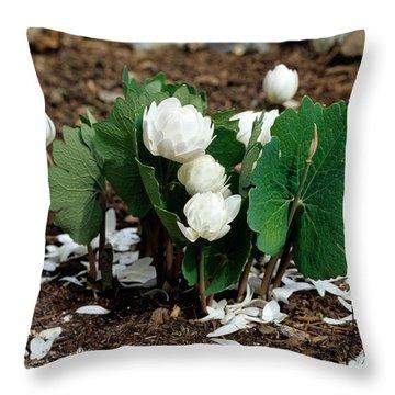 Blood Root Sanguinaria Canadensis Throw Pillow