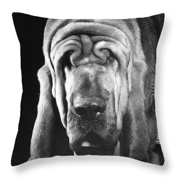 Bloodhound Portrait Throw Pillow by ME Browning